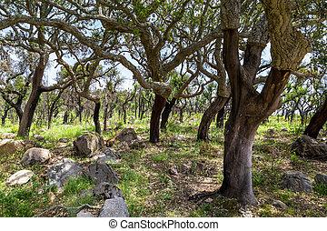 bouchez arbres, portugal