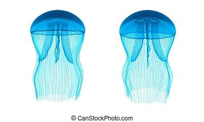boucle, blanc, bleu, biens, méduse