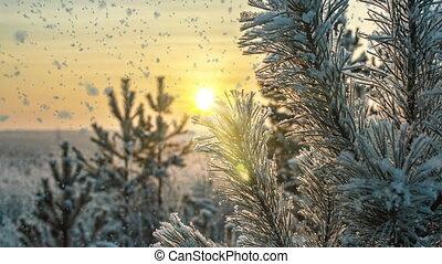 boucle, nature, hiver, mood., forêt, paysage, ensoleillé, froid, arbres, jour, neige blanc, cinemagraph., lumière claire, vidéo, tomber, temps, boucle