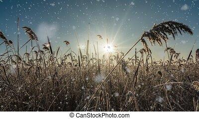 boucle, neige, tomber, temps, lumière hiver, vidéo, clair, cinemagraph, paysage nature, mood., ensoleillé, arbres, jour, boucle, blanc, froid, forêt