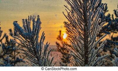 boucle, neige, tomber, temps, lumière hiver, vidéo, clair, paysage nature, mood., ensoleillé, arbres, jour, boucle, blanc, froid, forêt, cinemagraph.