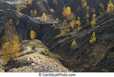 bouleau, arbres automne