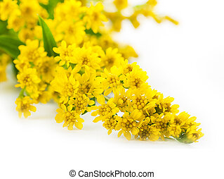 bouquet, fleur, asters, fond, jaune