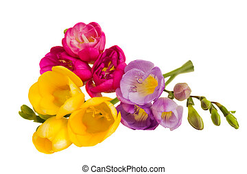 bouquet, freesias