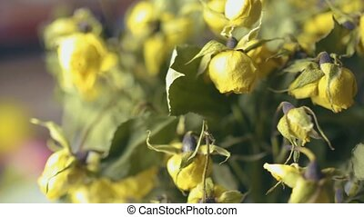 bouquet, haut, roses jaunes, séché, fin