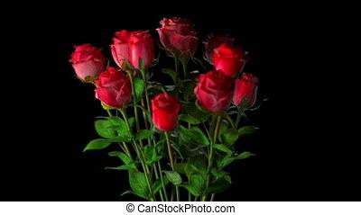 bouquet, roses, cassé
