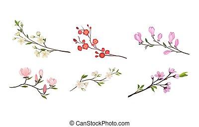 bourgeons, branches, vecteur, fleurir, arbre, tendre, ensemble, brindilles, fleur