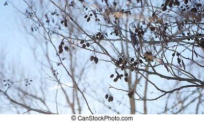 bourgeons, nature, printemps, mouvementde va-et-vient, offensive, arbre aulne, vent, branche, paysage
