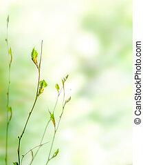 bourgeons, printemps, arrière-plan vert, nature