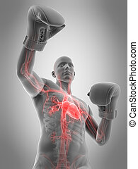 boxe, précis, pose, illustration, medically, 3d