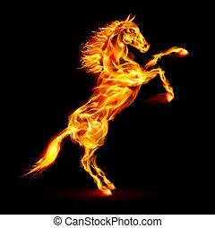 brûler, élevage, cheval, haut.