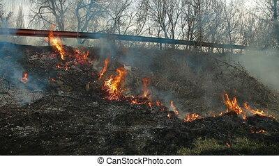 brûler, brosse, bord route
