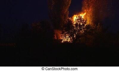 brûler, buisson, pompier, combat