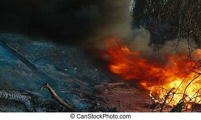 brûler, désert