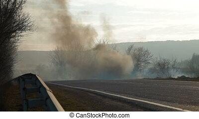 brûler, forêt, bord route