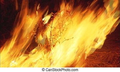 brûler, forêt, cu