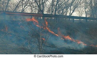 brûler, herbe, bord route