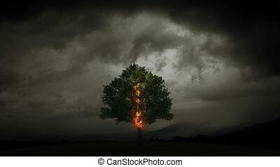 brûlures, arbre, éclair
