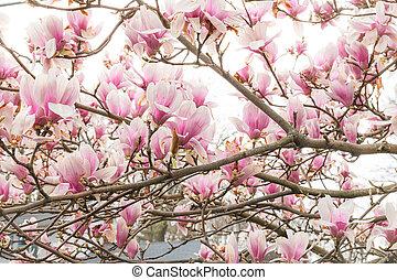 branche, magnolia