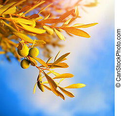 branche, olivier