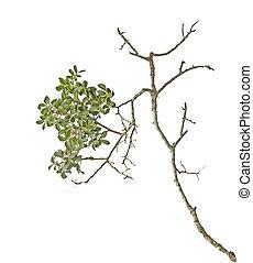 branche sèche