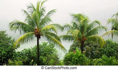 branches, équateur, pluie, exotique, paume, seychelles, vent