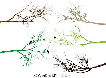 branches, arbre