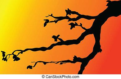 branches, crépuscule