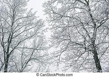 branches., nature hiver, surgelé, résumé, arbre, fond