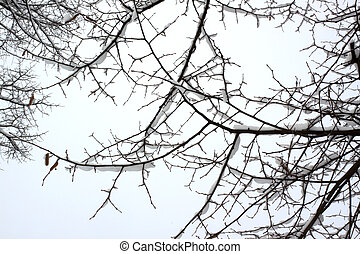 branches, neige
