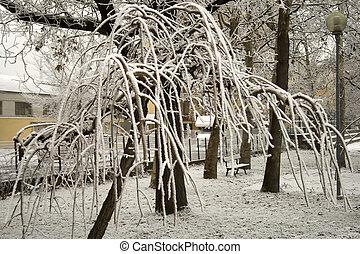 branches, surgelé