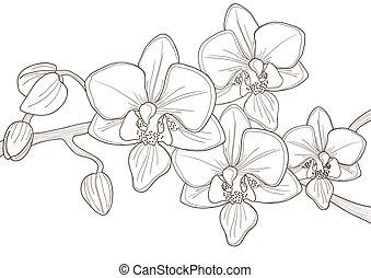 brindille, orchidée