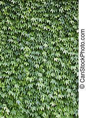 brique, couvert, feuilles, mur, vert