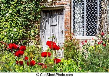 britannique, pendant, sussex, jardin, angleterre, printemps, vieux, pavot
