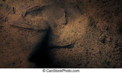 brosse, clairière, exposé, fossile, loin, sable