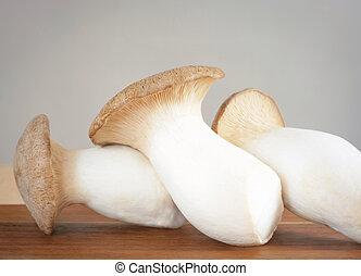 brouillé, champignon, brauner, krauter-seitling, arrière-plan gris