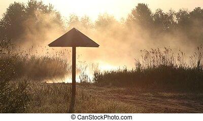 brouillard, bois, matin, parapluie, lac