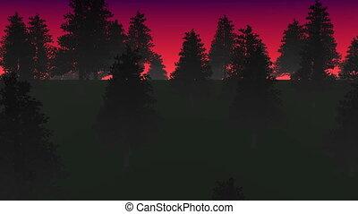 brouillard, capable, forêt, boucle, nuit