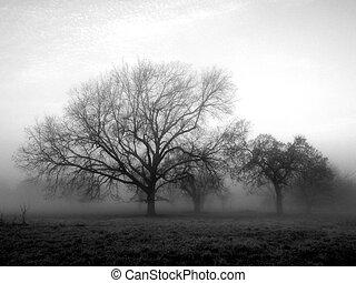 brouillard, dehors
