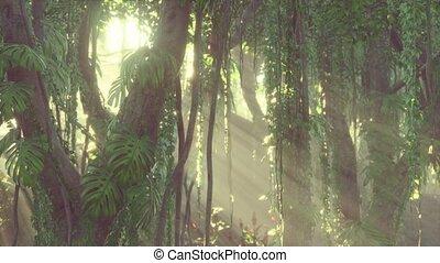 brouillard, profond, jungle, rainforest, exotique