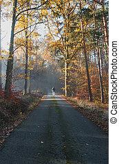 brouillard, tchèque, paysage, marche, homme, brumeux, automne, matin, jeune, route, forêt