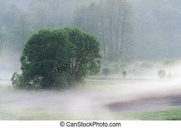 brume, autour de, champs, sur, arbres, matin, tôt, bas, pendre, brumeux, herbe