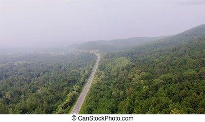 brumeux, forêt dense, route