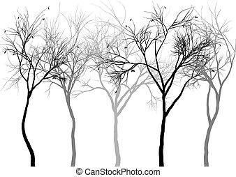 brumeux, forêt, vecteur