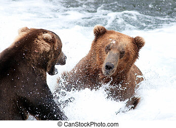 brun, alaska, eau, deux, combat, grand, ours