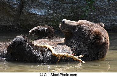 brun, arbre, ours, péninsulaire, branche, jouer