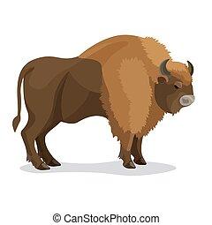 brun, aurochs, couleur, isolé, animal, cornes, blanc
