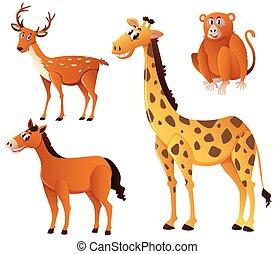 brun, différent, fourrure, genres, animal