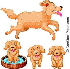 brun, fourrure, chien, chiots