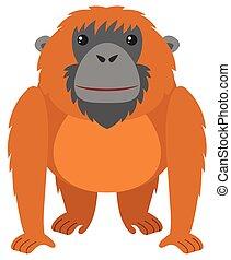 brun, fourrure, orang-outan